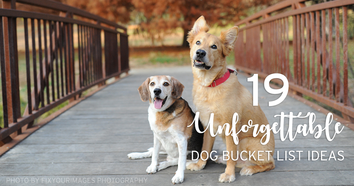 19 Unforgettable Dog Bucket List Ideas From Ford & Otto