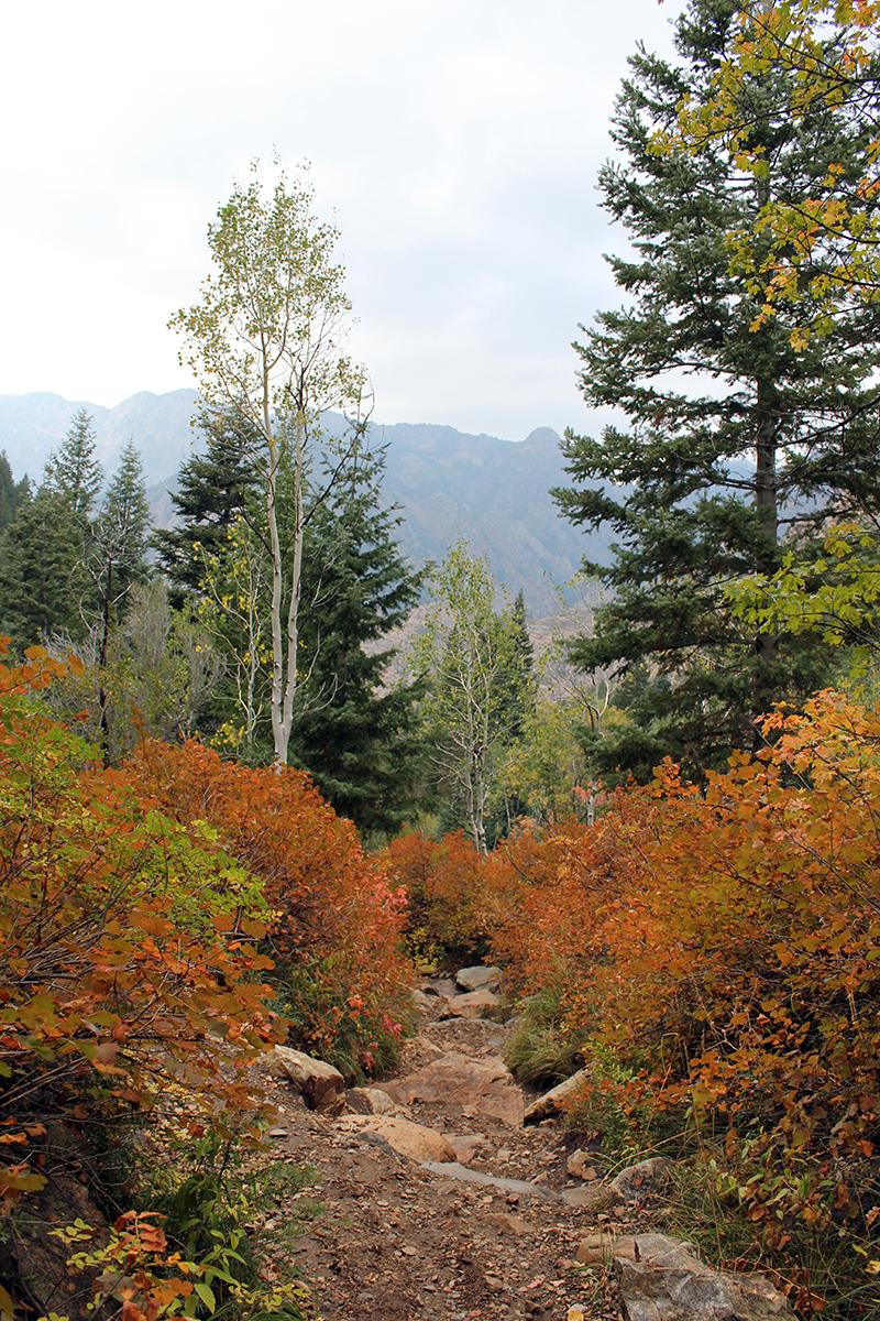 Fall Hiking Path at Lake Blanche Trail in Utah