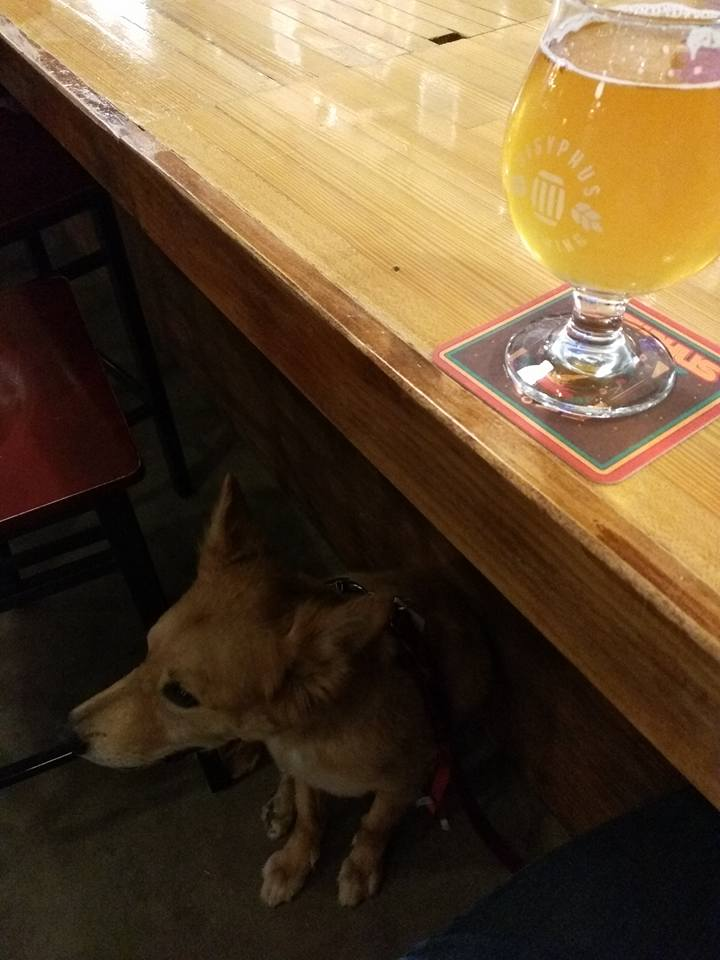 Dog Under Bar at Sisyphus Brewing Minneapolis