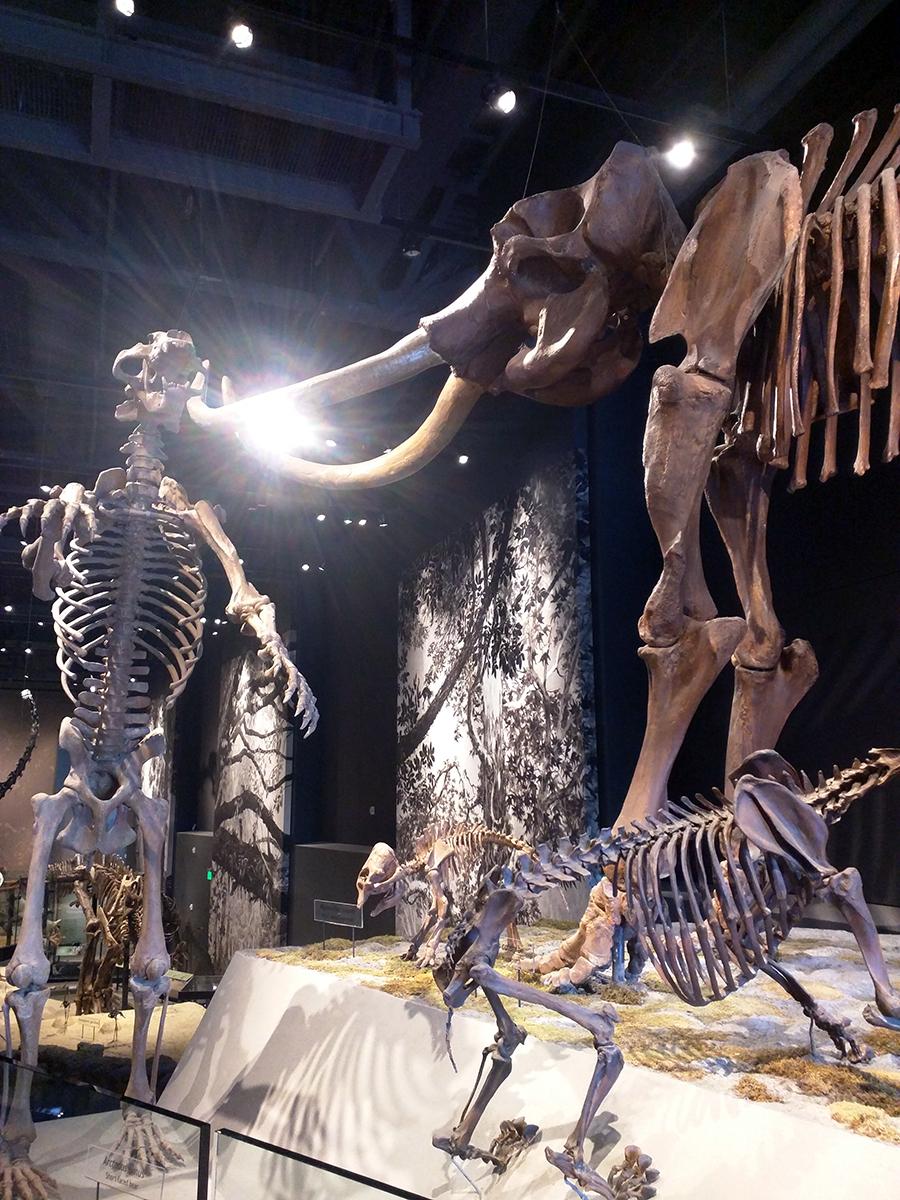 Dinosaurs at the Salt Lake City Natural Museum