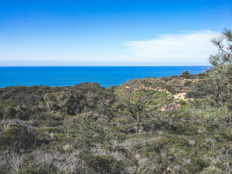 Torrey Pines Hike with Pacific Ocean Views Near San Diego, CA