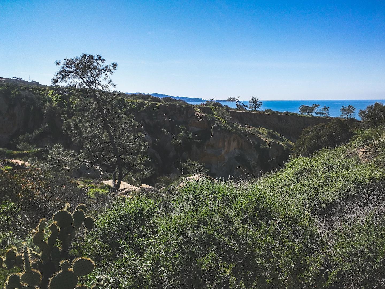 Torrey Pines Hike with Pacific Ocean Views + Cactus