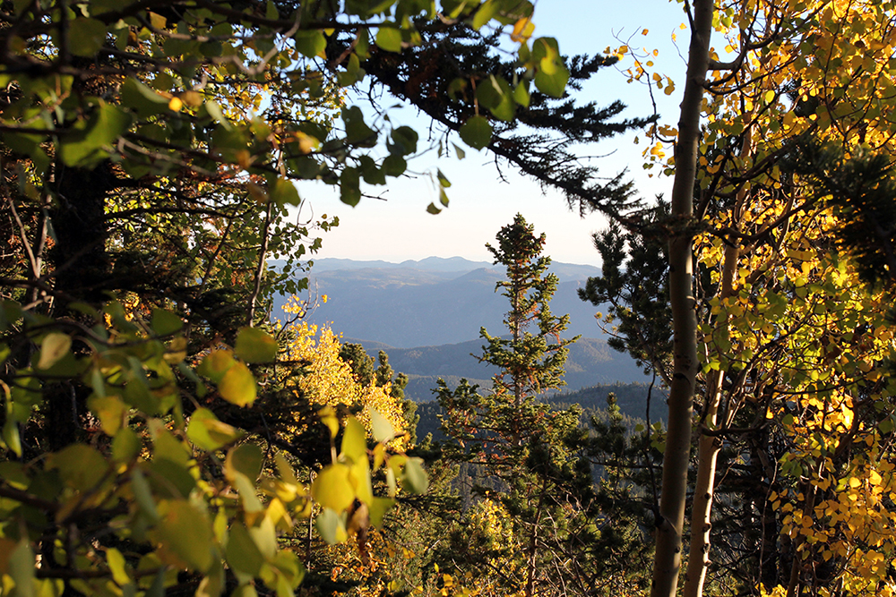 Rocky Mountains Peeking Through Aspens on Pikes Peak