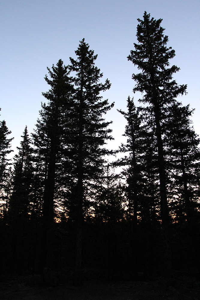 Sunrise in the Pines at Pike National Forest