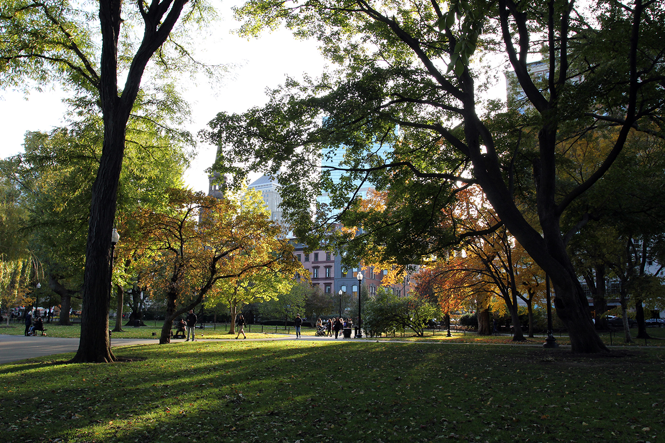 Fall Foliage in the Afternoon Sunlight at Boston Common