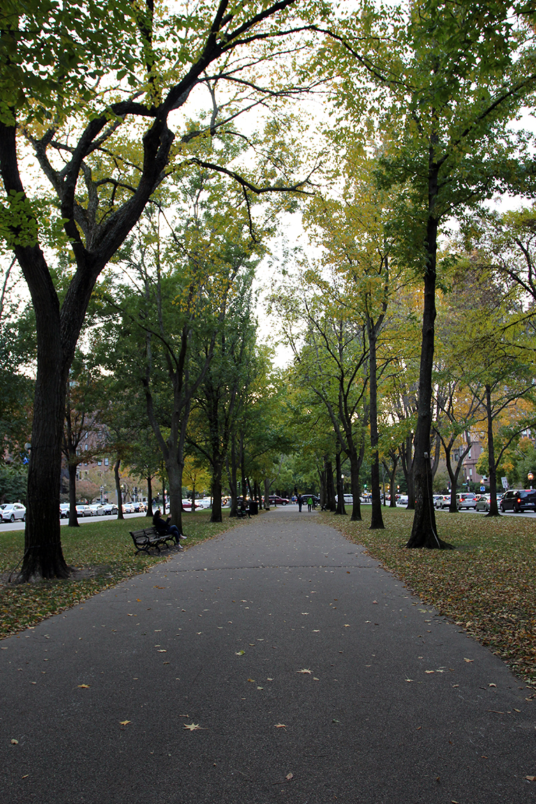 Fall Leaves on Commonwealth Avenue Mall in Boston