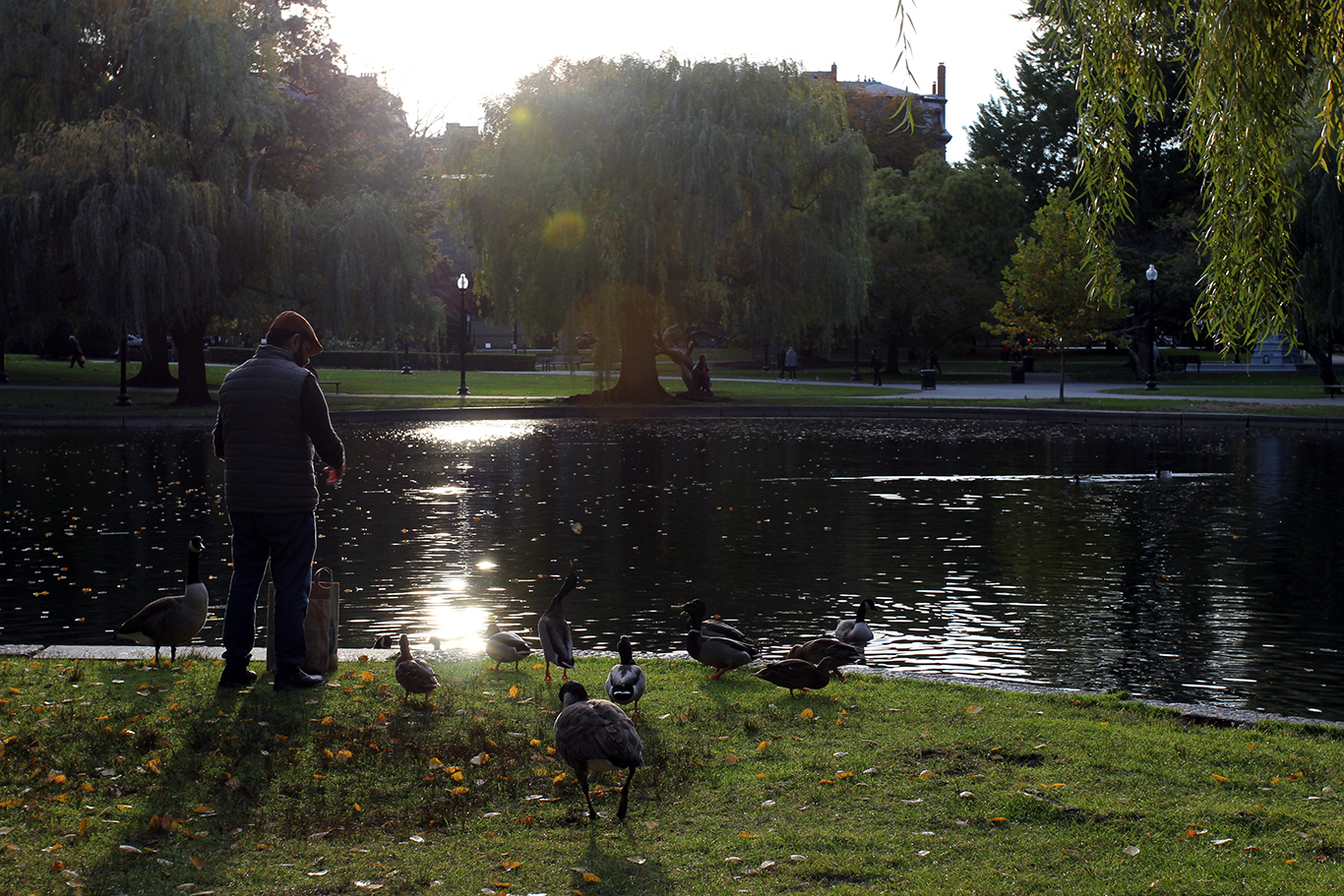 Feeding Ducks & Geese at Boston Common