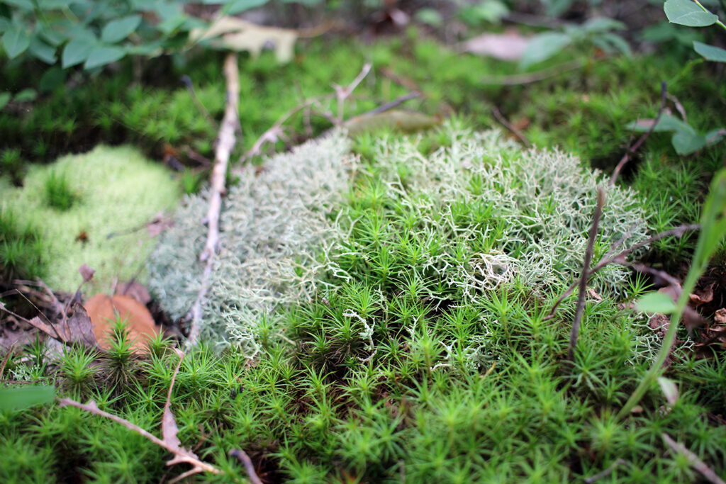 Moss on the Ozark Highlands Trail