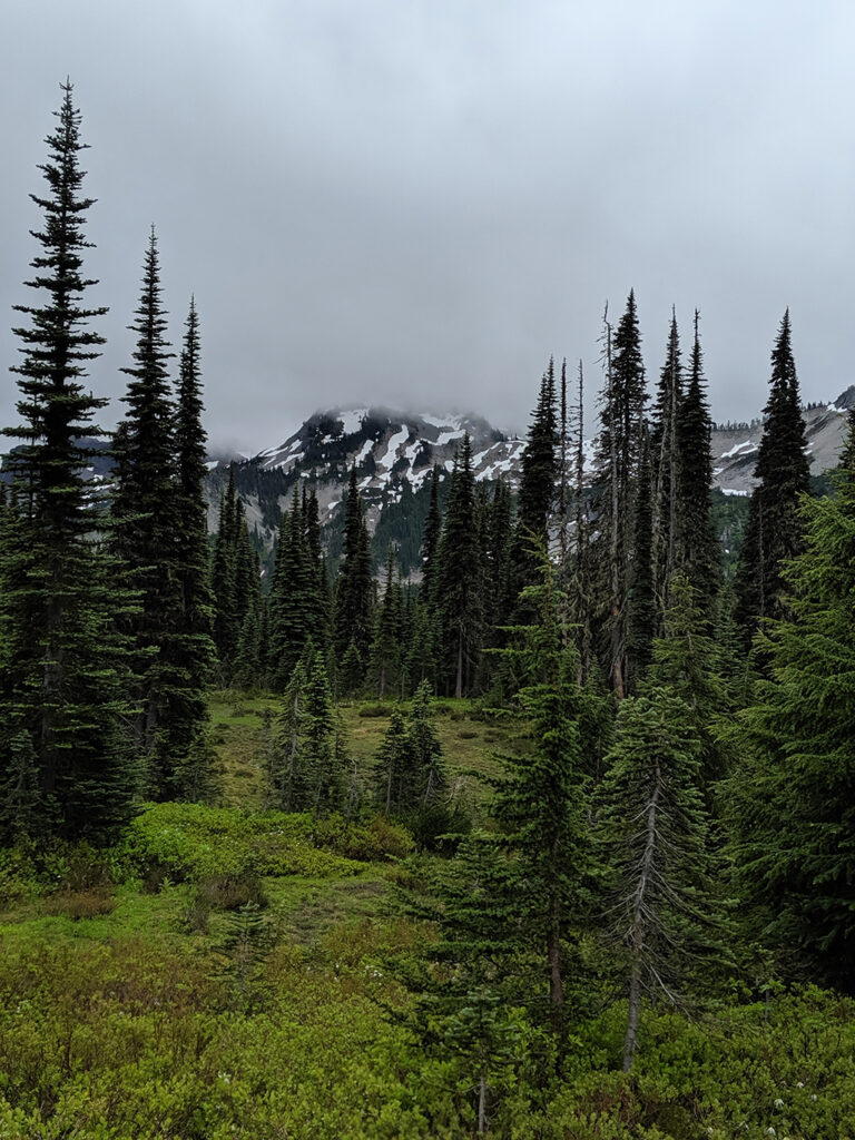 Misty Meadow & Mountain Views at Mount Rainier National Park