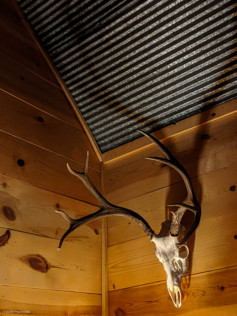 Mounted Deer Skull at Cabin in Stratton, Colorado