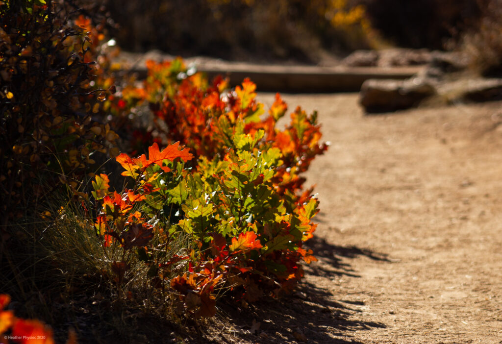 Fall Foliage on Trail at Black Canyon of the Gunnison National Park