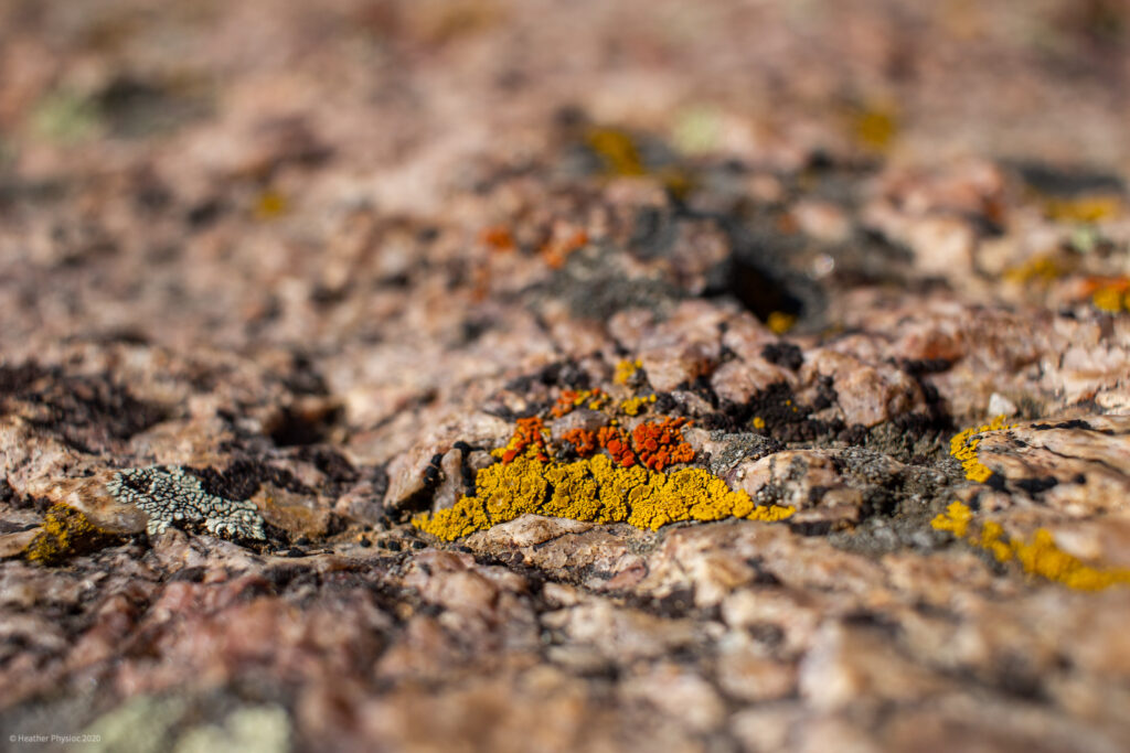 Orange & Yellow Lichens at Black Canyon of the Gunnison National Park