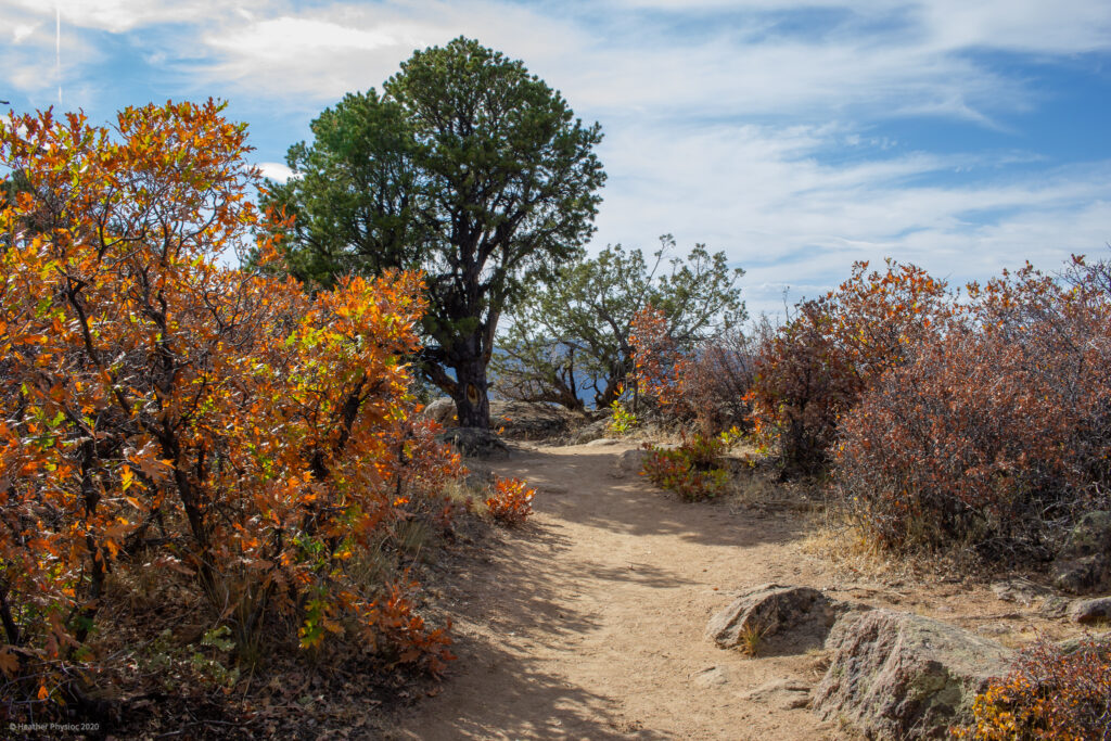 Autumn Foliage on Trail at  Black Canyon of the Gunnison National Park