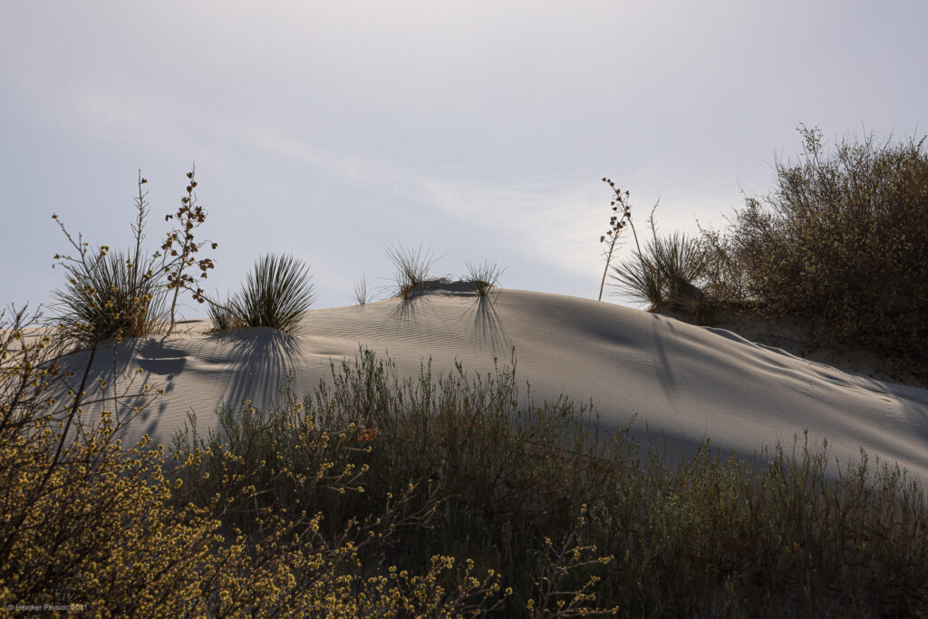 Plant Life on a Hill in the Afternoon at White Sands National Park in New Mexico