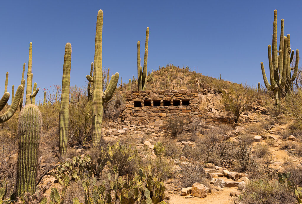 Cactus Forest & Stone Structure on Hills of Saguaro National Park in Tucson, Arizona