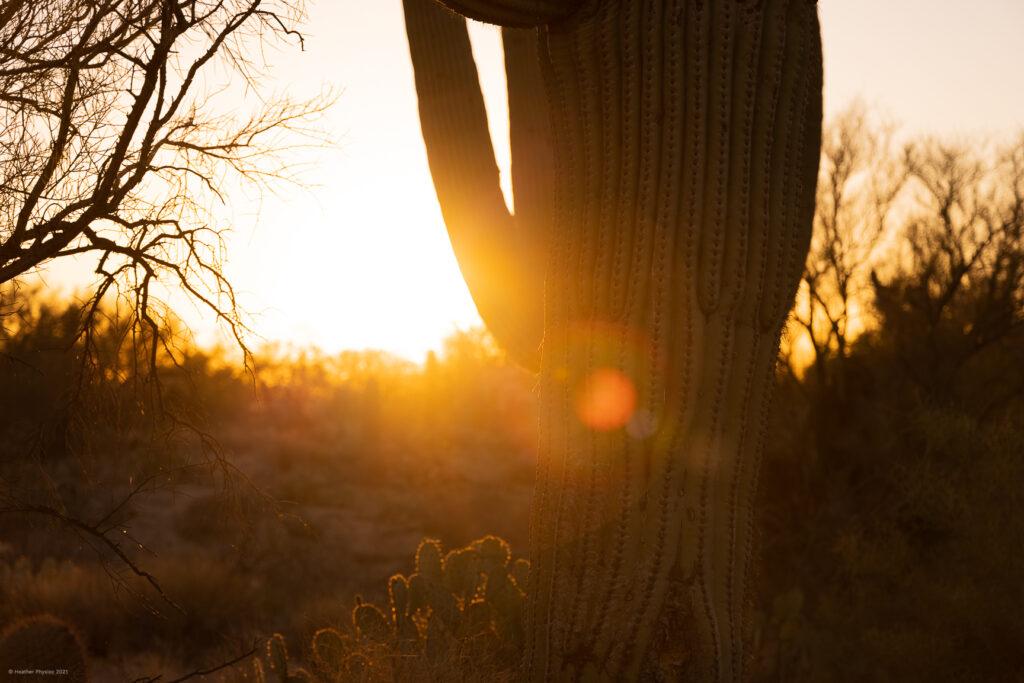 Saguaro Cactus & Desert at Sunset in Oro Valley, Arizona