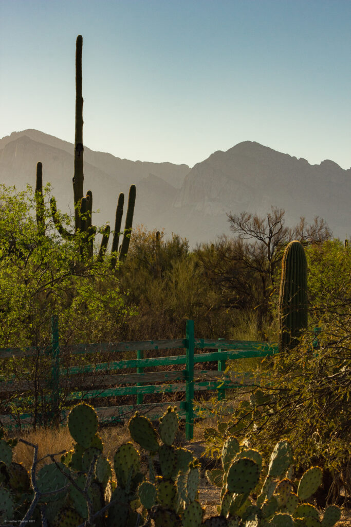 Turquoise Wooden Fence with Saguaro Cactus & Mountains in Oro Valley, Arizona